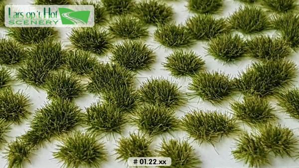 Grasbüschel Spätsommer kurz