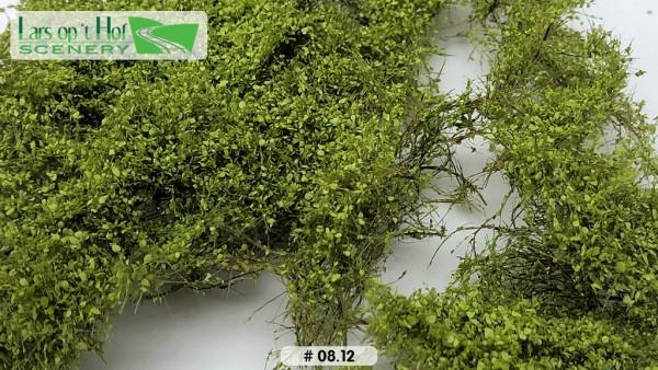 Dornbüsche Lichtgrün