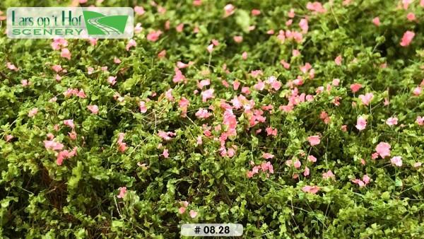 Heckenrosen rosa