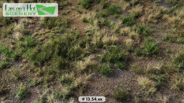Grasmatte Wildwiese Sommer - Armer Boden